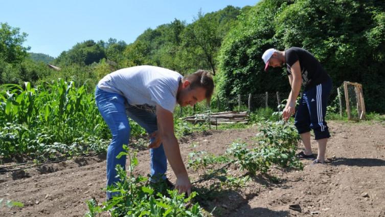 Bilal i Haris na jednoj od plantaža: Ima posla, ali sve se stiže