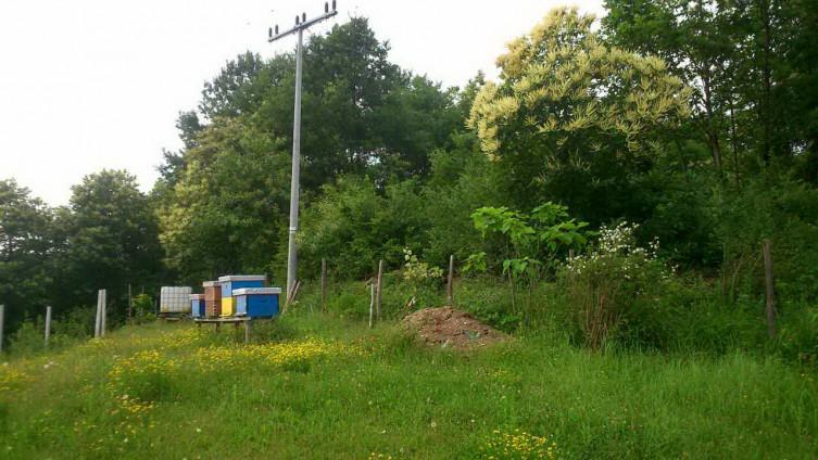 Potrebno je uraditi bazu kestenovih šuma