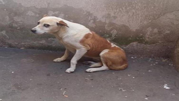 Fotografija silovanog psa (Foto: Facebook)