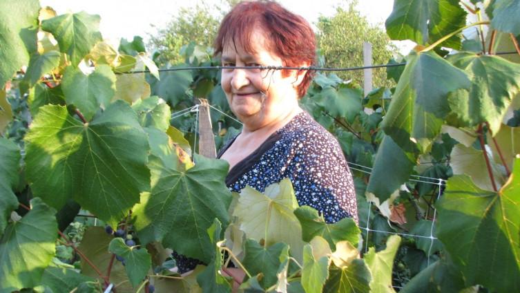 Zora Gajanović u svom vinogradu, koji je podigla prije 10 godina