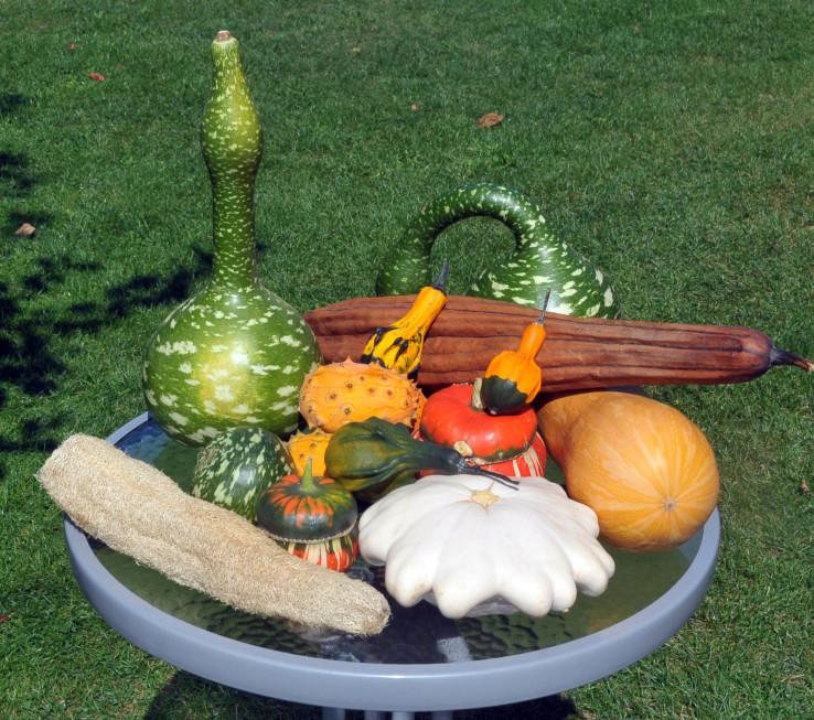 Neobični plodovi koji su narasli u Žarkovom vrtu