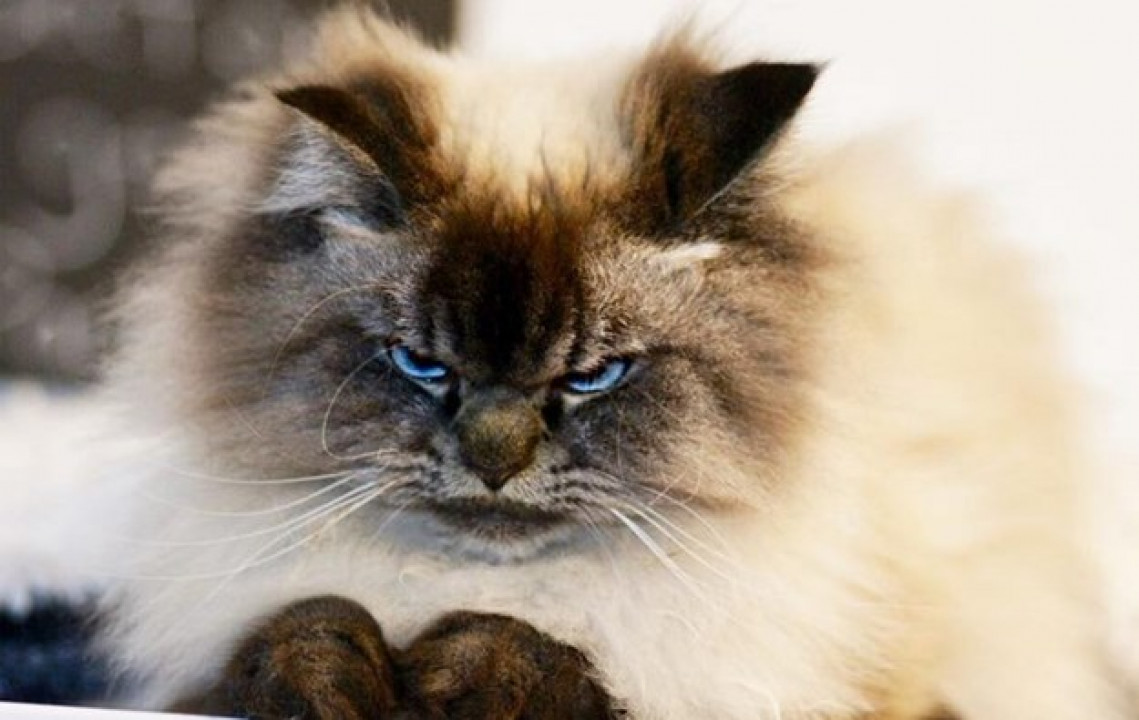 širi fotografije maca amateri cuckold