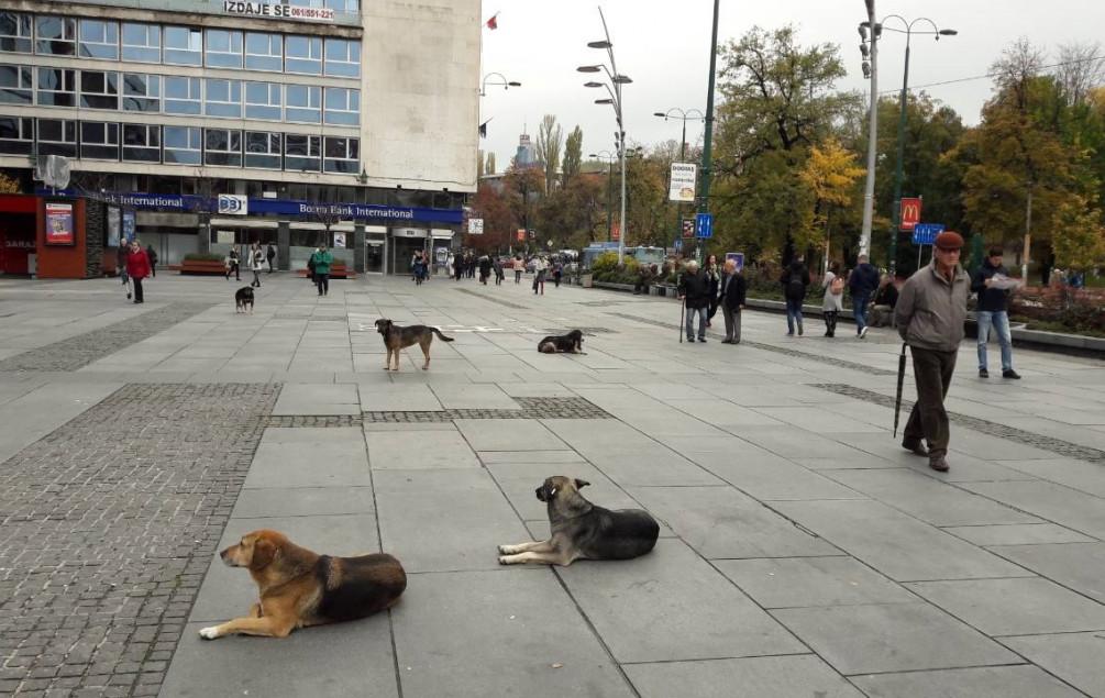 Podaci pokazuju da se broj ataka smanjio: Prošlog mjeseca psi lutalice napali i izgrizli 37 građana