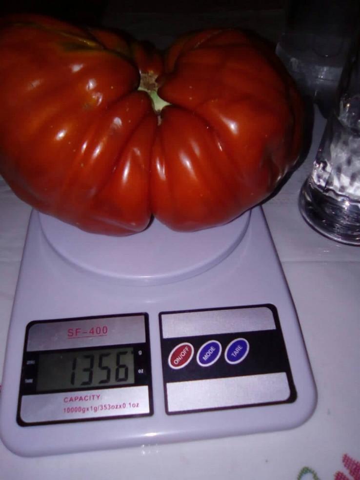 Džinovski paradajz - Avaz, Dnevni avaz, avaz.ba