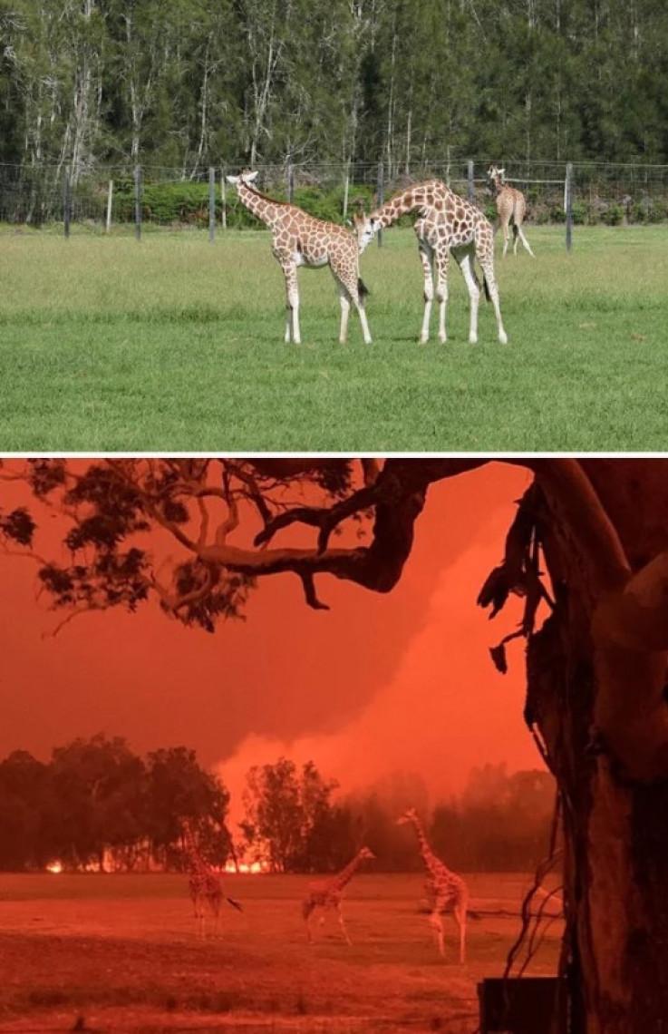 Park divljih životinja