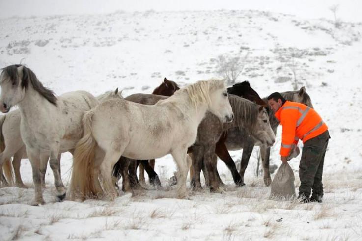 Krišto: I dalje ćemo se brinuti o konjima - Avaz, Dnevni avaz, avaz.ba