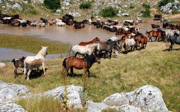 Ljeti dolaze na Borovu glavu te tako stradavaju u saobraćaju  - Avaz, Dnevni avaz, avaz.ba