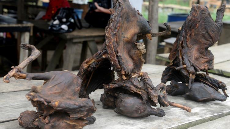 Neke od životinja koje se mogu naći na pijacama u Kini