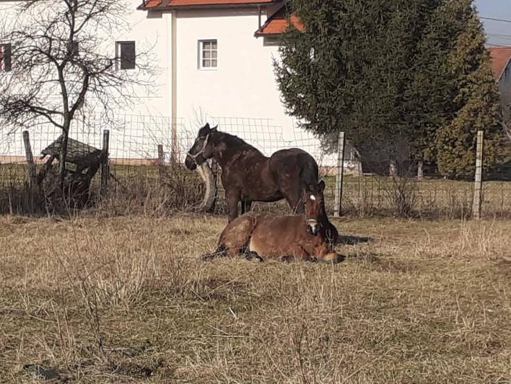Konji ostaju pod službenim nadzorom