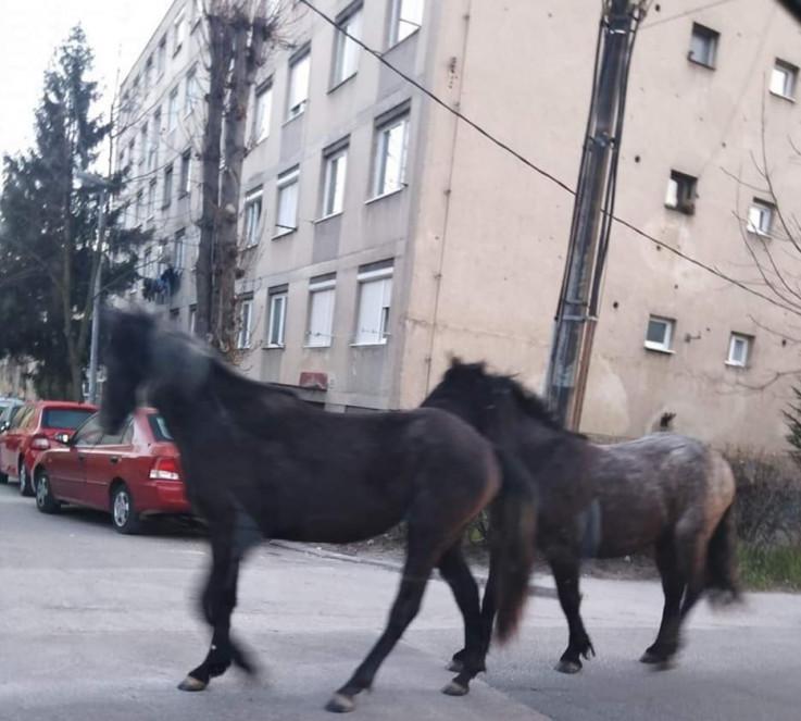 Konji u Švrakinom - Avaz, Dnevni avaz, avaz.ba