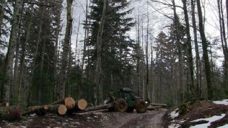 Sindikat šumarstva BiH traži zaštitu radnih mjesta