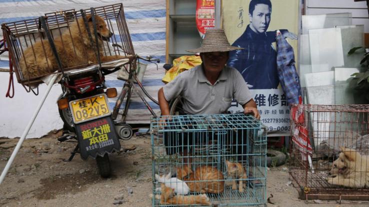 Većina Kineza ne osjeća želju da jede takvo meso