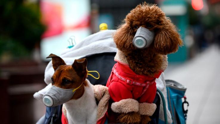 Testiranje pasa na antitijela pokazalo je da imaju manje izgleda da  se zaraze