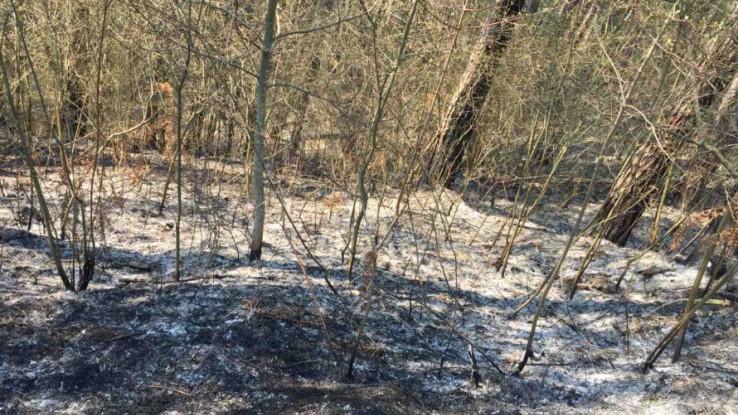 Vatra zahvatila šumske površine