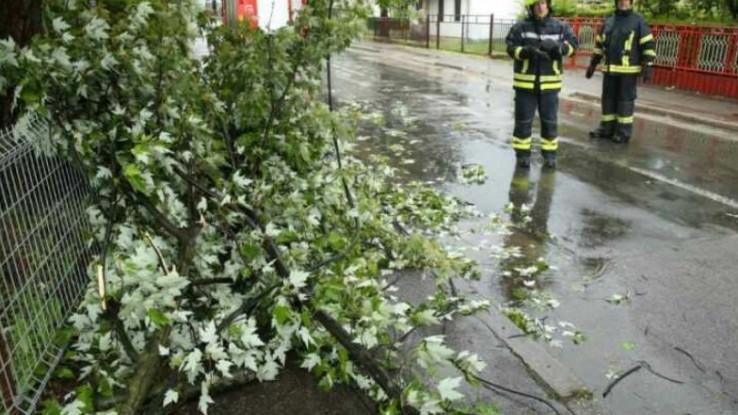 U Banjoj Luci oboreno drvo - Avaz, Dnevni avaz, avaz.ba