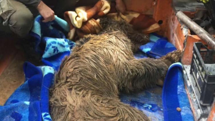 Medvjedica pronađena u jako lošem stanju