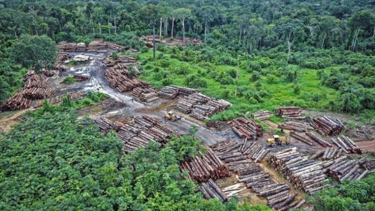 Oko 99 posto krčenja šuma u Brazilu prošle godine bilo je ilegalno