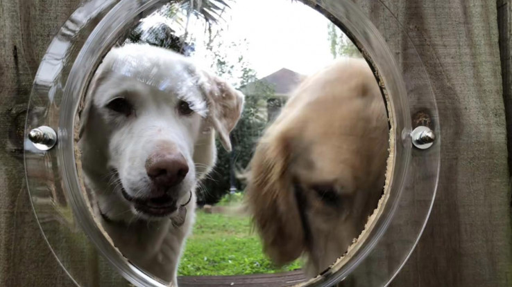 Prozor na ogradi za pse