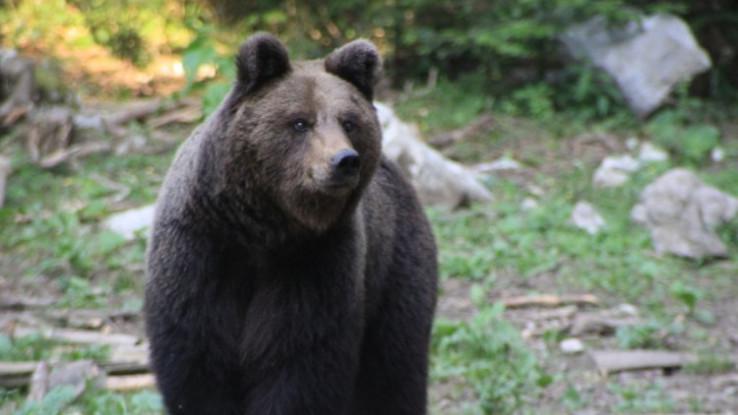 Neophodno formirati interventni tim za velike zvijeri - Avaz, Dnevni avaz, avaz.ba