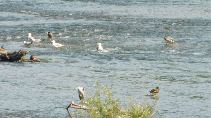 Ptice selice pronašle novo stanište