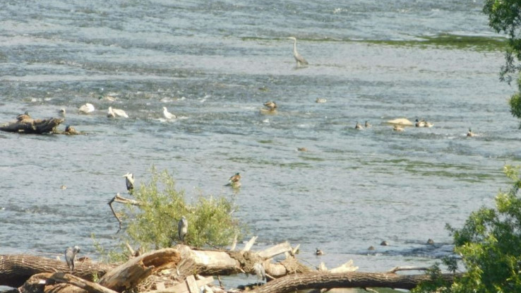 Ptice na vogošćanskoj petlji