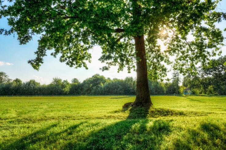 Povežite se s prirodom - Avaz, Dnevni avaz, avaz.ba