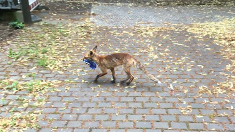 Stanovnici Celendorfa iznenadila lisica