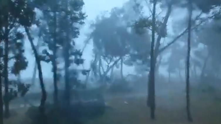 Vjetar ruši stabla u Umagu