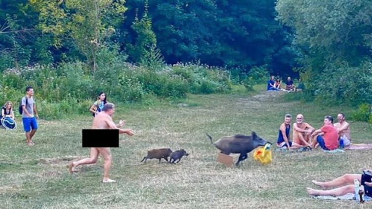 Potjera za divljom svinjom
