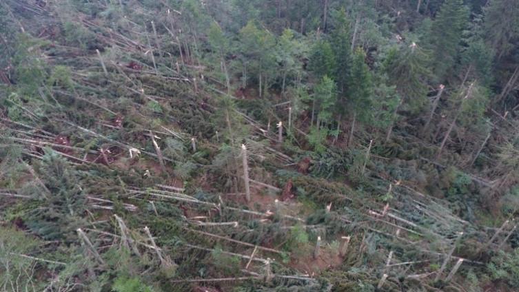 Najviše stradalo drvo smreke i jele