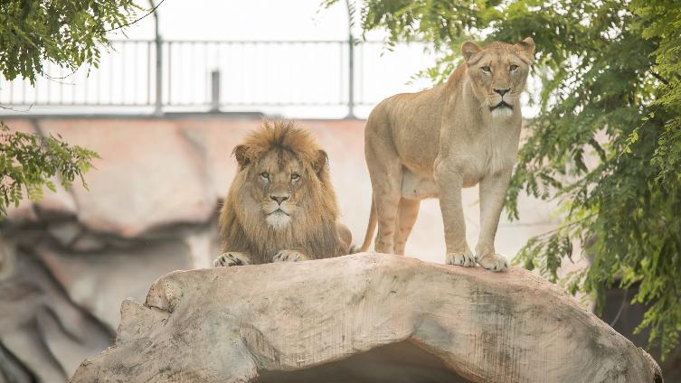 Zoo vrt Bingo