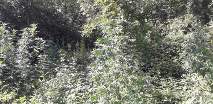 Plantaža u selu Batkuša