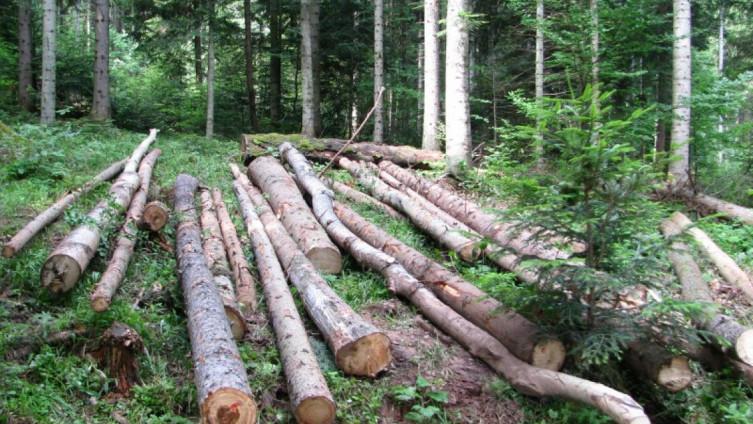 Smrtno stradao prilikom sječe drva u šumi