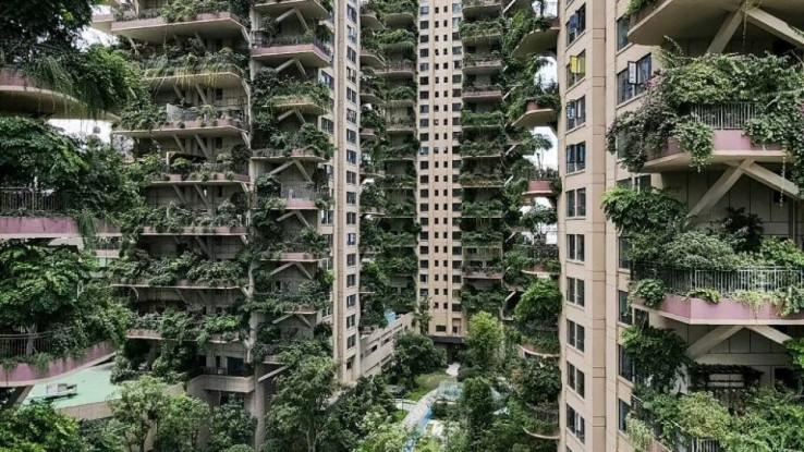 Vegetacija na balkonima podivljala