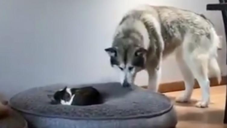 Mamut i mačka