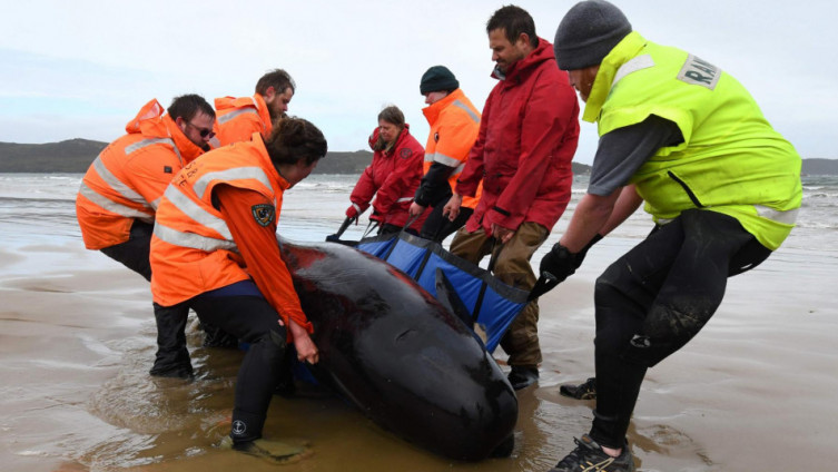 Spasioci pokušavaju spasiti životinje