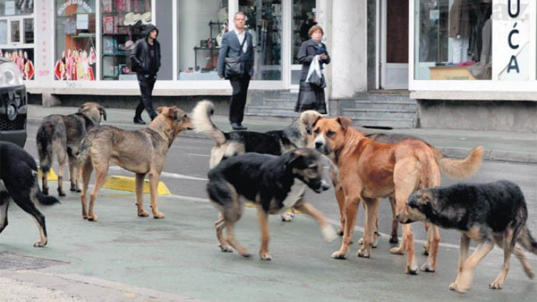 Oglasila se udruženja za zaštitu životinja