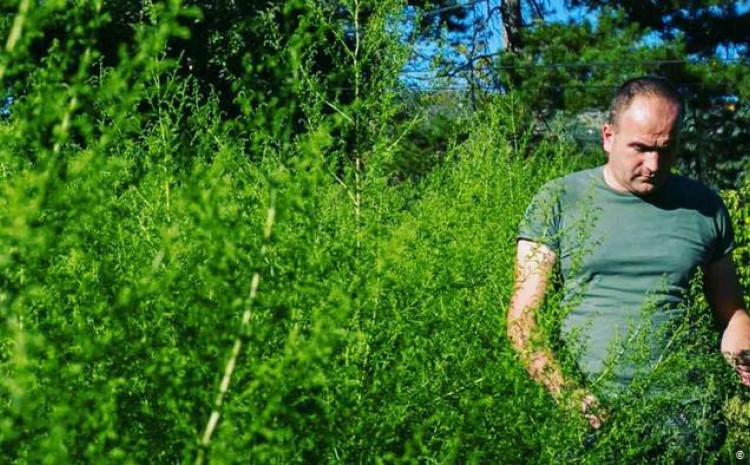 Pelin raste i u Hercegovini