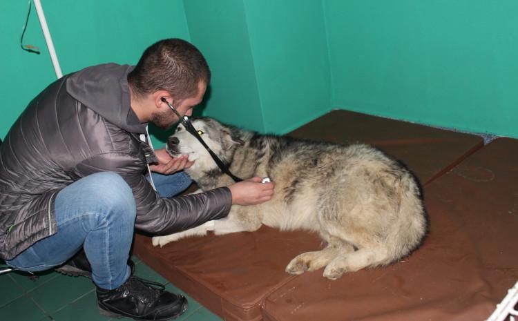 Dr. Avdić koji je sinoć zbrinuo psa, bdije i jutros pored njega