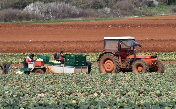 Poljoprivrednici i dalje rade, siju i uzgajaji kao prije pandemije