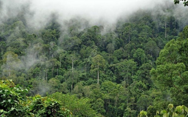 Japan and Brazil have inked a deal on safeguarding the biodiversity of the Amazon rainforest