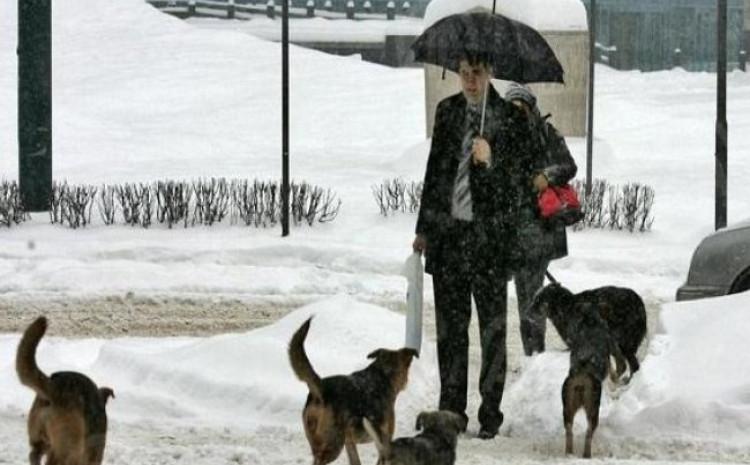 Grupe pasa lutalice svaki dan se mogu vidjeti na gradskim ulicama