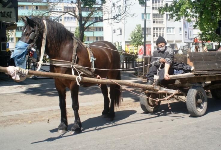 Šerif Seferović ljetos sa konjem