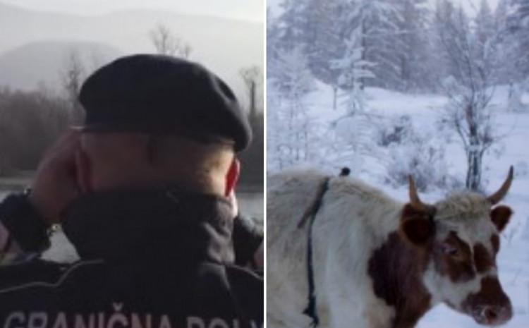 Policajci spriječili krijumčarenje stoke