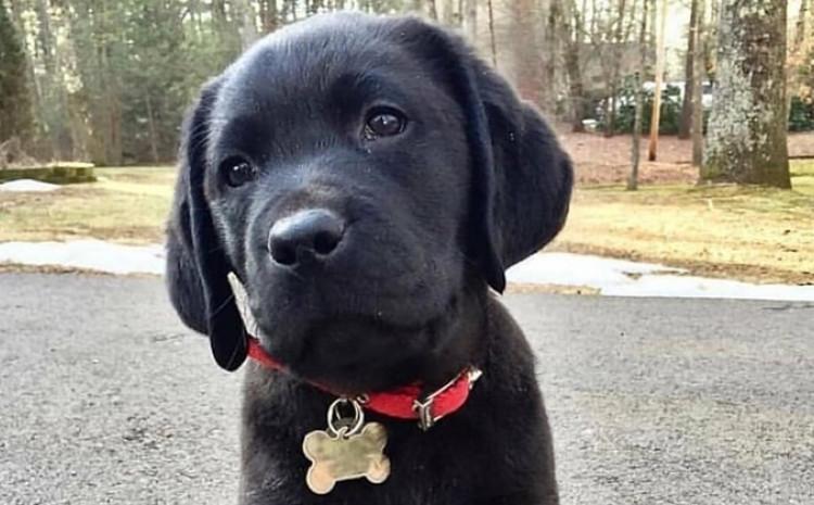 Pas pred bolnicom šest dana čekao vlasnika