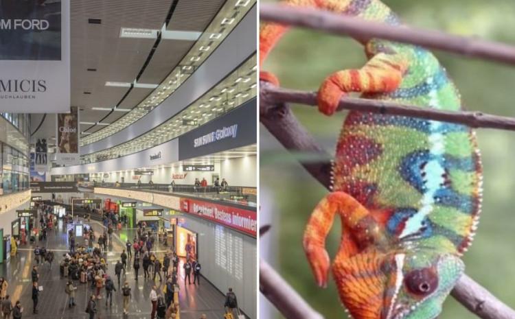 Aerordom u Beču: Životinje sakrio u čarape i prazne kutije