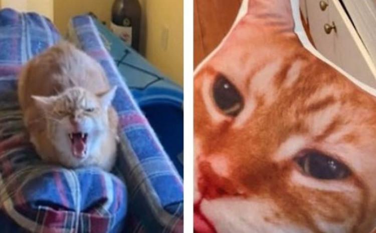 Reakcija mačke nasmijala sve