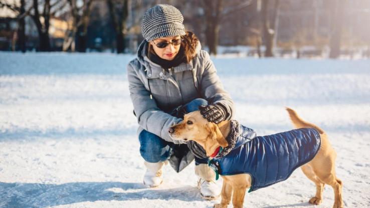 Odjeća za pse je korisna i nije samo modni dodatak