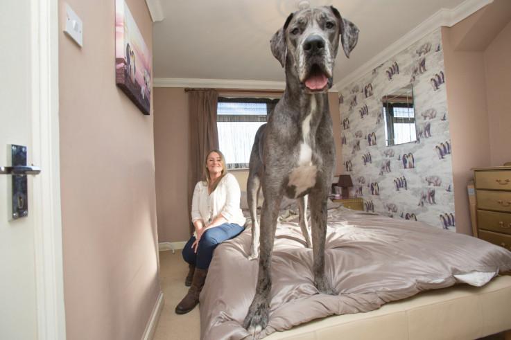 Najviši pas na svijetu Fredi