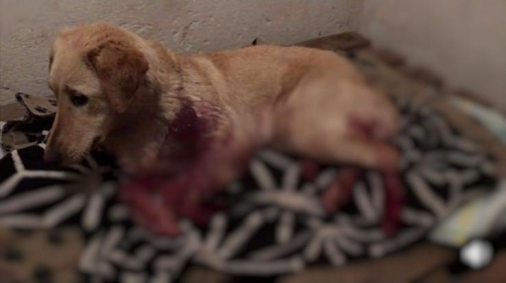 Upucao psa u naselju Janjići kod Zenice